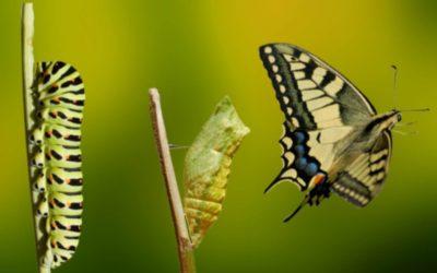 Z egorobota do Človeka v spokojnom vzťahu alebo Fázy premeny zo sebeckej húsenice na slobodného motýľa